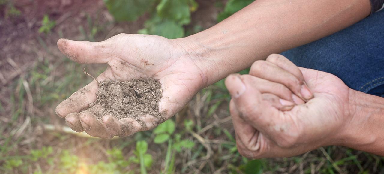用手壓的時候會黏成一塊,當你手抖一抖的時候,土就會散開,這就是好的土壤。