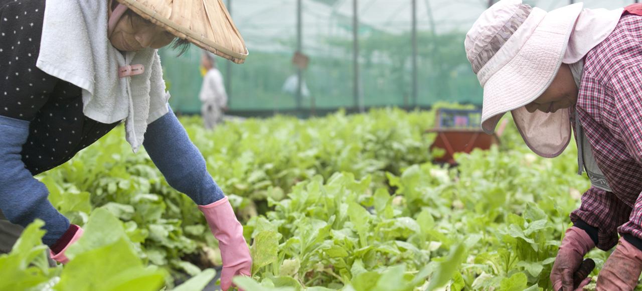 農藥殘留的污染與ADHD之間,或許有密不可分的關連