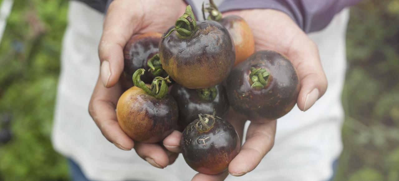 想避免農藥殘留對孩子造成的可能傷害,盡量選擇在地的當季新鮮蔬果,食用前務必清洗乾淨
