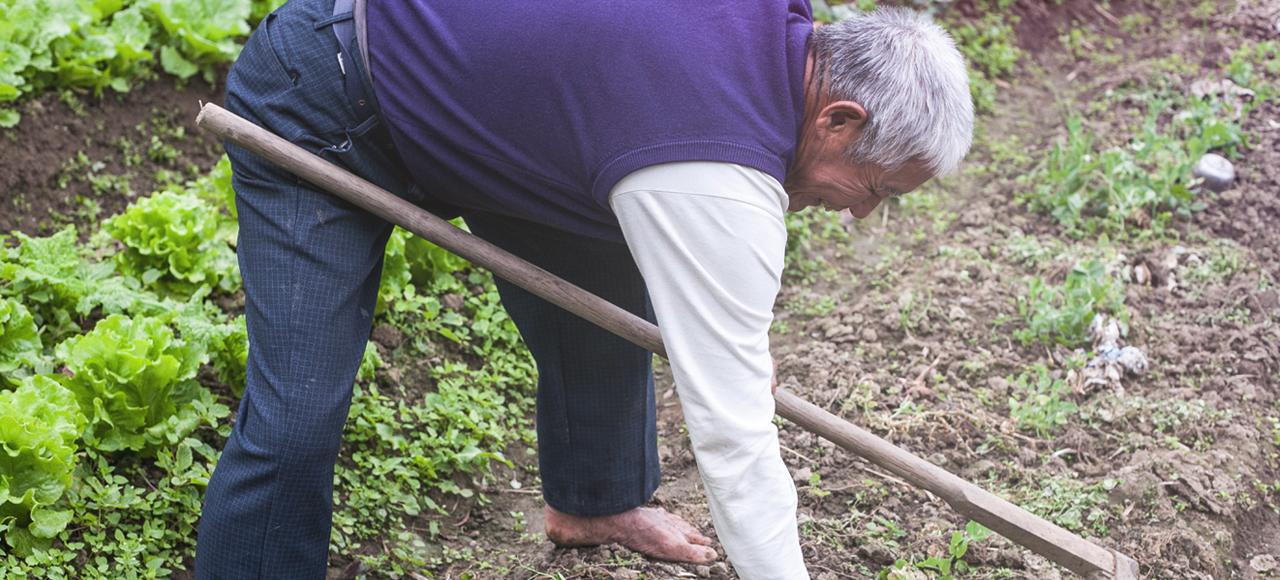 他是75歲的有機老農張忠志,這塊呈現出旺盛生命力的菜田,就是他與太太、兒子努力多年的豐碩成果。