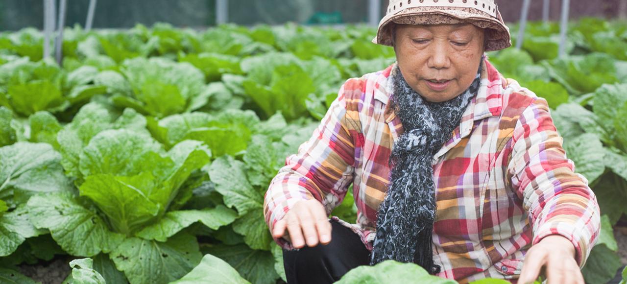會選擇有機生態農法是因為不想污染深愛的家園。